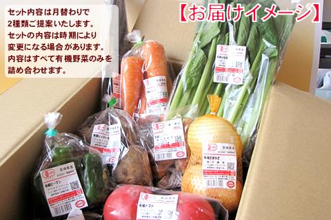 7月有機野菜セット
