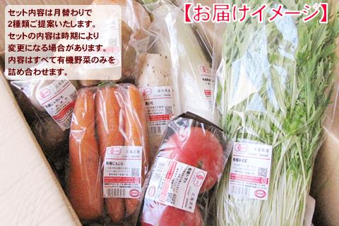 9月有機野菜セット