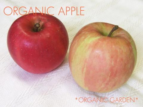 有機りんご・色づき