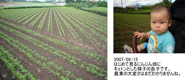 自然農法栽培【フルーティー人参】観察日記[JAS有機]