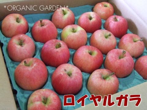 有機りんご「ロイヤルガラ」