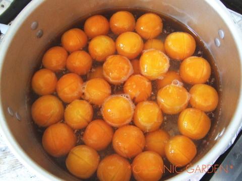 有機栽培キンカンで甘露煮作り8