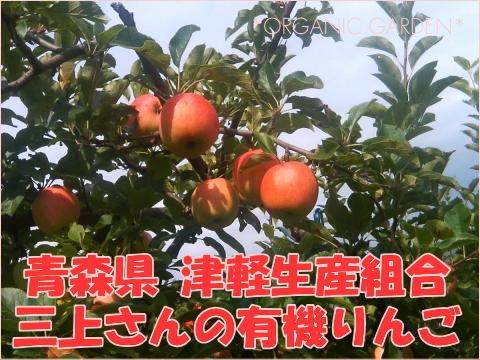 三上さんの有機りんご