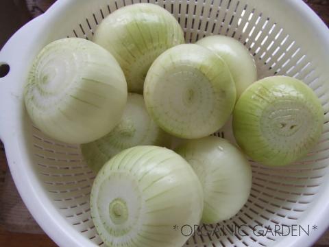 有機ミニ玉ねぎの丸ごとスープ煮03