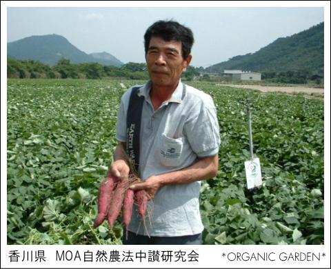 有機野菜生産者:MOA自然農法中讃研究会