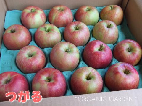 有機りんご「つがる」